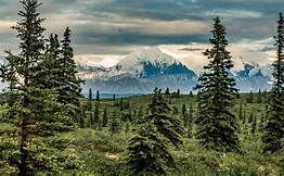 Alaska forest open to logging