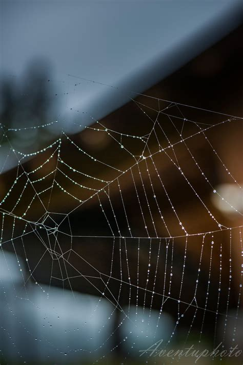 astonishing photographs  spider webs