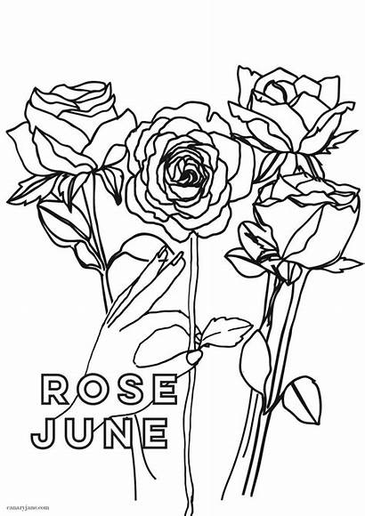 Coloring Flower Birth Rose June Printing Month