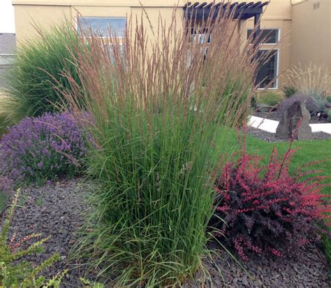 grasses for landscaping ornamental grasses update your curb appeal with just one plant the garden glove