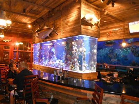 alligator cuisine beautiful tropical fish tank picture of bucks