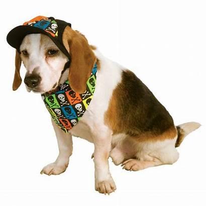 Dog Accessory Neon Halloween Costume Baxterboo Dogs