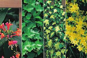 Dahlien Im Topf überwintern : kletterpflanzen im topf berwintern wohn design ~ Orissabook.com Haus und Dekorationen