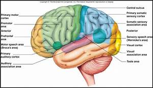Sensory Systems (Chapter 16) at University of Northern ...