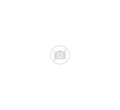 Cartoon Sea Shells Stickers Vector Transperant Alpha