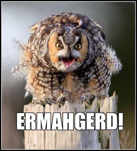 Owl Who Meme - pin funny owls meme center on pinterest
