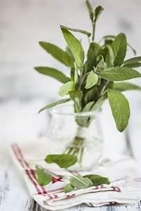 Mückenplage Im Haus : gartenpflanzen und k chenkr uter die im sommer die m cken fernhalten fresh ideen f r das ~ Orissabook.com Haus und Dekorationen