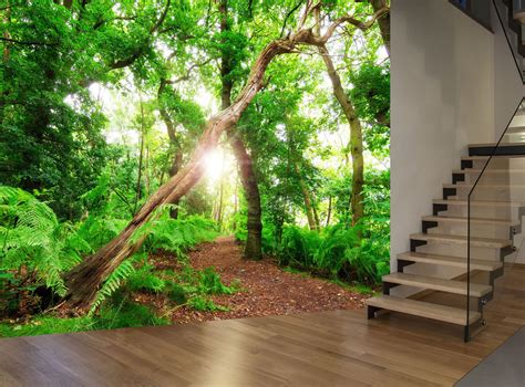 forest trees nature plant green wall mural photo wallpaper