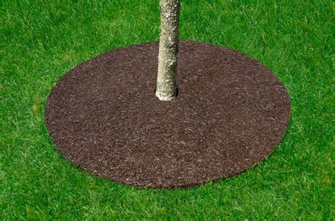 Rubber Tree Rings Instead of Mulch