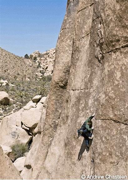 Tree Joshua Climbing Mountain Gear Presented Rock