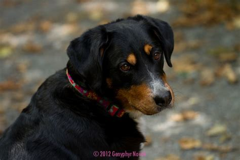 Black And Brown by Black And Brown Dogs Breeds