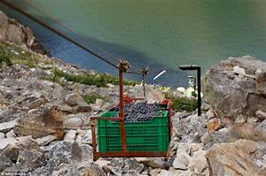 Spanish fruit pickers collect grapes from precarious ...