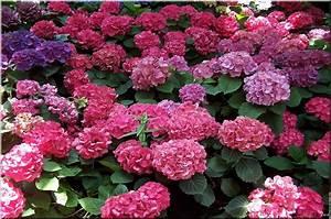Plantes De Jardin Pour Dcorer Votre Extrieur Oh Green