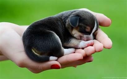Dog Puppy Beagle Wallpapers Desktop Background