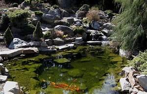 Bassin De Jardin Pour Poisson : bassin poisson carpes ko les bijoux vivants du jardin ~ Premium-room.com Idées de Décoration