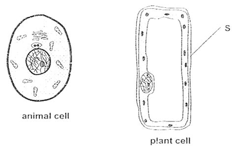 Draw And Label A Typical Bacteria Cell