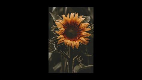 Sierra Burgess Is A Loser // Sunflower