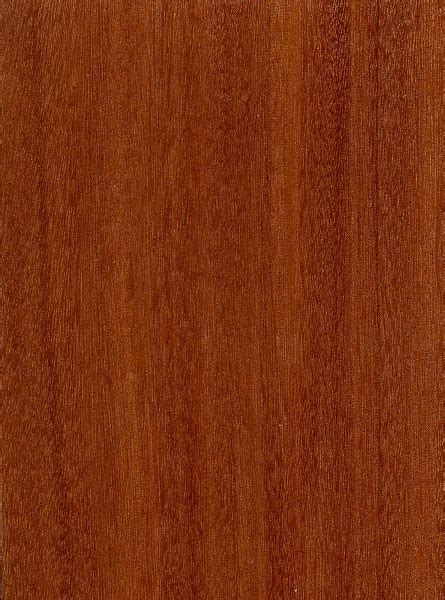 "Rainforest Mahogany Smooth ""MAX WINDSOR""   5in.   Carolina"