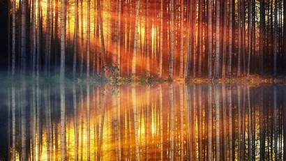 4k Forest Lake Sunset Wallpapers Nature Reflection