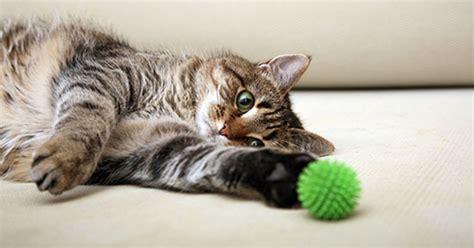attenti ai gatti le  cose che odiano montaigne