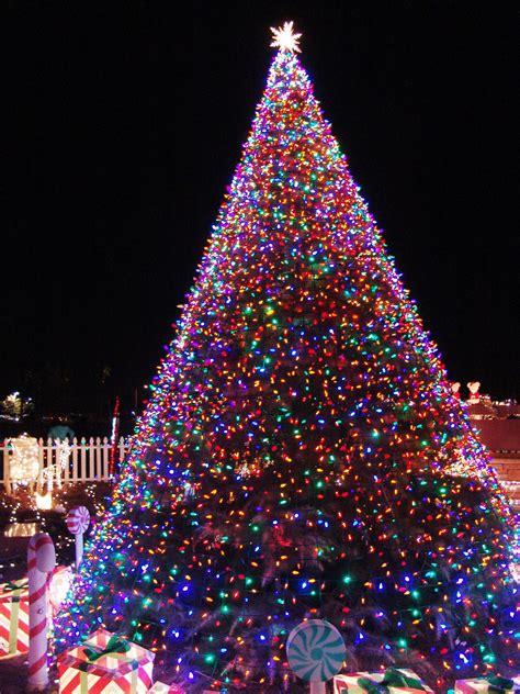 how to do christmas lights on trees aberdeen tree lighting family information for children