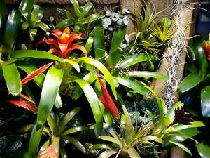 Pflanzen Für Terrarium : mein neues dendrobatenbecken forum froschnetz ~ Orissabook.com Haus und Dekorationen