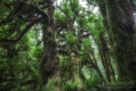hoh rainforest  olympic national park  sorensen