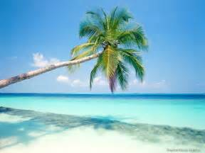 adele design hotel berlin playa mexico tourist destinations