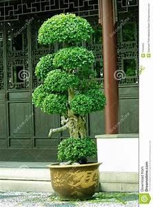 Arbuste D Intérieur : arbre d int rieur florideeo ~ Premium-room.com Idées de Décoration