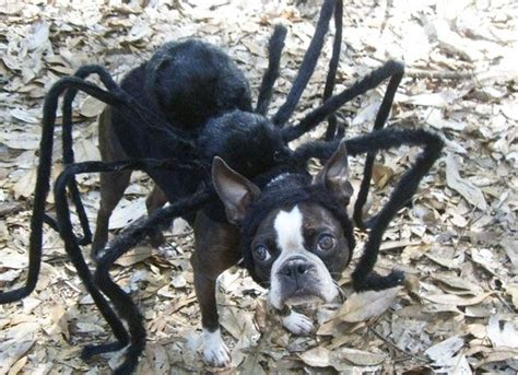 tarantula spider dog costume dog spider costume pet