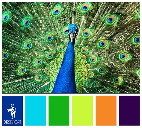 peacock royal blue green lime orange purple