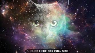 space cat space wallpapers and desktop backgrounds up to 8k