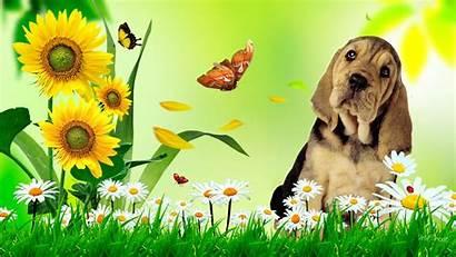 Summer Fun Desktop Puppy Flowers Whimsical Sunflower