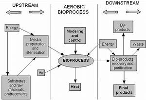 Characteristic Flow Chart For Biotechnology Centred On Bioprocess 3