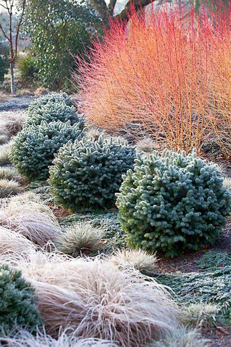 giardino invernale monday green inspo le piante per il giardino invernale