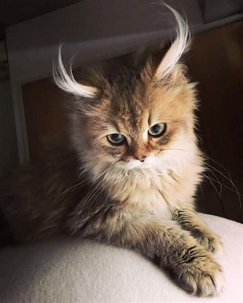 Worlds-Most-Beautiful-Cats
