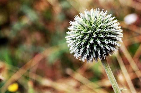 kvet priroda makro tapety na fotografie zdarma na pixabay
