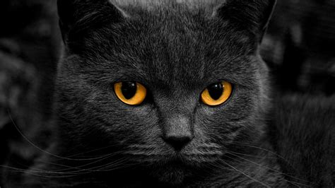 Orange Eye Wallpaper by Cat Orange Shadow Wallpapers Hd Desktop And Mobile