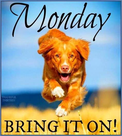 Monday Bring It On Pictures, Photos, and Images for