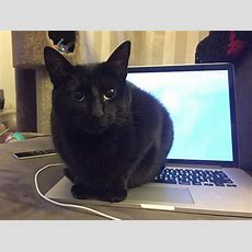 How To Catproof Your Laptop Computer And Desk Area