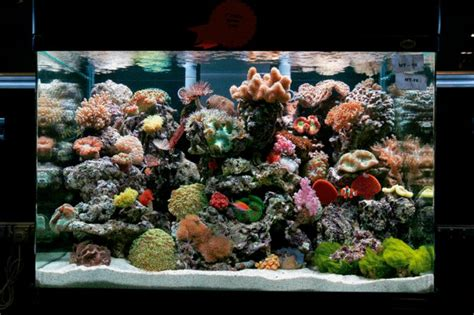 Saltwater Aquarium Aquascape by How Should I Aquascape My Reef Tank Practical Fishkeeping