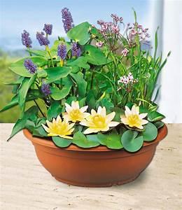 Miniteich Pflanzen Set : pflanzen f r miniteich miniteich anlegen der besondere garten miniteich f r den balkon 29 ~ Buech-reservation.com Haus und Dekorationen