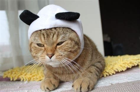 FREE SHIPPING,pet cat hat cap,cute and funny,drop shipping