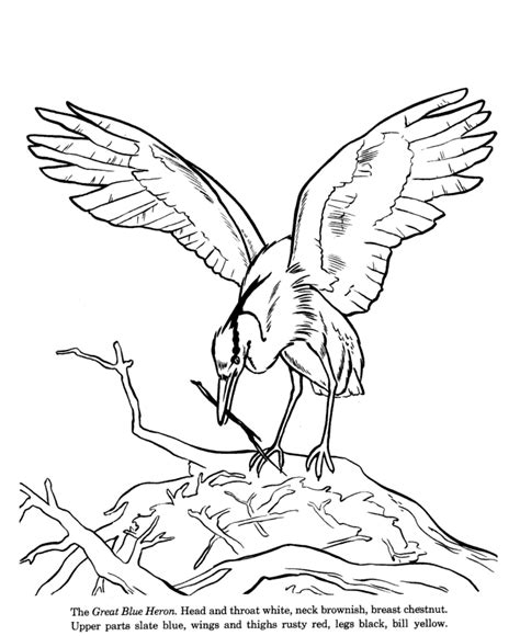 great blue heron drawing  coloring page seastars