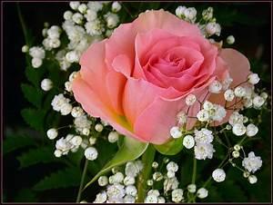 Beautifull Flowers 2011: pink rose bouquet