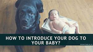 how to introduce your dog to the baby With how to introduce a puppy to a dog