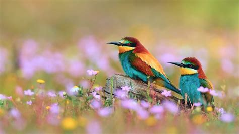 Animals And Birds Wallpaper - colorful birds flowers and colorful birds photos hd