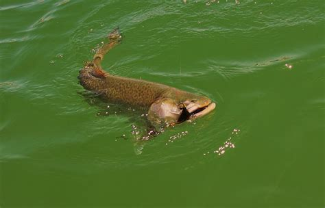 Lc Ranch Utah Fly Fishing Photo Gallery Utah Trout