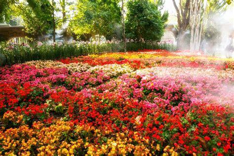 Top Full Sun Perennials For Michigan Gardens