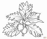 Breadfruit Coloring Pages Drawing Blackberry Printable Fruit Cranberry Fruits Plant Getdrawings Silhouettes Categories sketch template